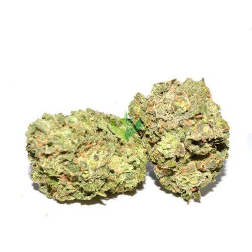 island-sweet-skunk-strain-vancouver-island-bc-3