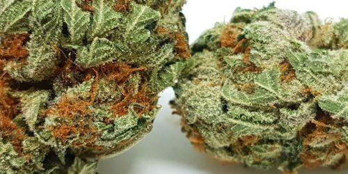cannabis-strain-chemo-nugs