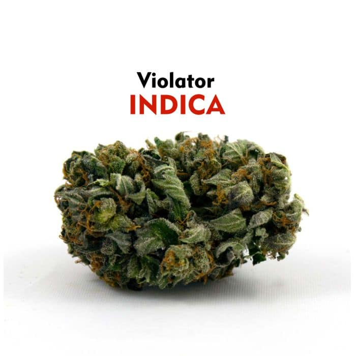 faircannacare-buy-marijuana-online-canada-Violator-Indica