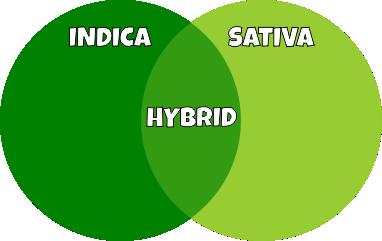 indica-vs-sativa-vs-hybrid