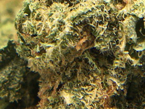 purple-romulan-strain-macro